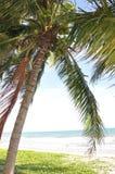 De palm van de kokosnoot op het strand Royalty-vrije Stock Foto's