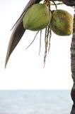 De palm van de kokosnoot op het strand stock foto