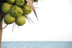 De palm van de kokosnoot op het strand Stock Fotografie