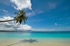 De palm van de kokosnoot op perfect tropisch strand Royalty-vrije Stock Afbeeldingen
