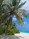 De palm van de kokosnoot op tropisch strand royalty-vrije stock afbeelding