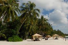 De palm van de Maldiven Stock Foto's