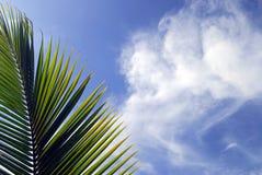 De Palm van de ochtend stock fotografie