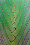 De palm van de reiziger Stock Foto