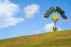 De palm van de reiziger op een heuvel royalty-vrije stock afbeelding