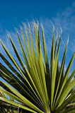 De palm van de ventilator Stock Foto's