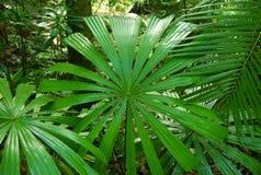 De Palm van de ventilator Stock Afbeelding