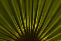 De palm van de ventilator royalty-vrije stock afbeeldingen