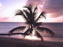 De Palm van de zonsondergang stock fotografie