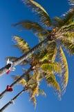 De Palm van Kerstmis Stock Foto