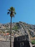 De Palm van Kotor Stock Foto's