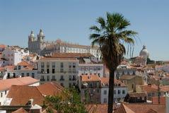 De palm van Lissabon Stock Afbeelding