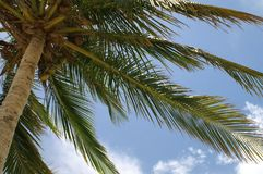 De Palm van Pictoral Stock Foto's