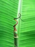 De palmblad van de banaan Royalty-vrije Stock Fotografie
