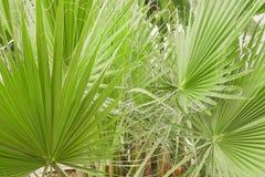 De palmbladen op palmclose-up Stock Afbeelding