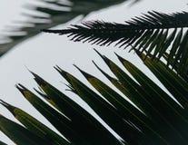 De palmbladen sluiten omhoog Stock Afbeeldingen