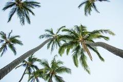 De palmen stock afbeeldingen