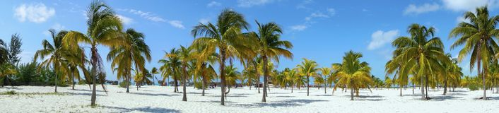 De Palmen Cayo Largo Cuba van Playasirena tropical beach caribbean sea stock afbeelding