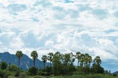 De palmen en de hemel met mooie wolken Stock Fotografie