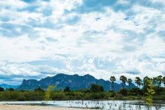 De palmen en de hemel met mooie wolken Stock Foto's