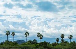 De palmen en de hemel met mooie wolken Royalty-vrije Stock Foto's