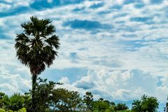 De palmen en de hemel met mooie wolken Royalty-vrije Stock Fotografie