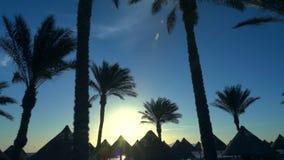De palmen en met stro bedekt roofed hutten stock video