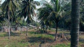 De palmen groeien tussen slechte oude gebouwen en asfaltweg stock footage