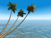 De palmen op exotische tropisch zijn stock foto's