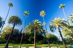De palmen van Californië Royalty-vrije Stock Foto