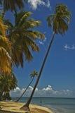 De palmen van Cocunut Royalty-vrije Stock Foto's