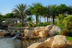 De palmen van de datum in park Stock Foto's