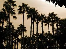 De Palmen van de jachthaven Royalty-vrije Stock Foto's
