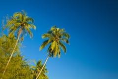De palmen van de kokosnoot Royalty-vrije Stock Fotografie