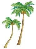 De palmen van de kokosnoot. Stock Afbeelding