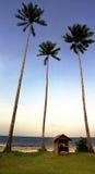 De palmen van de kokosnoot door oceaan Royalty-vrije Stock Foto's