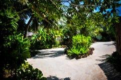 De palmen van de Maldiven Royalty-vrije Stock Afbeeldingen