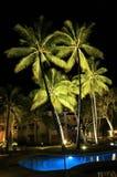 De palmen van de toevlucht bij nacht Stock Afbeeldingen