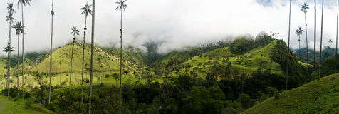 De palmen van de was dichtbij Salento in Colombia Stock Fotografie