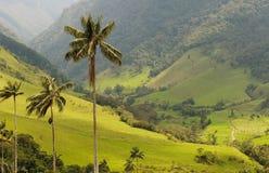 De palmen van de was van Cocora Vallei, Colombia Stock Afbeeldingen