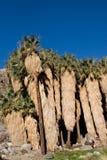 De palmen van de woestijn stock afbeelding