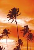 De palmen van de zonsondergang Royalty-vrije Stock Fotografie