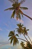 De palmen van de zonsondergang Stock Fotografie