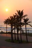 De palmen van Durban Royalty-vrije Stock Foto