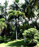 De Palmen van Hawaï Stock Fotografie