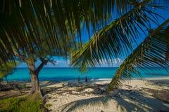 De Palmen van het Biminieiland Royalty-vrije Stock Foto