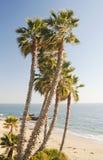 De Palmen van het Laguna Beach Stock Afbeeldingen