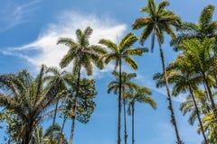 De palmen van het Ubatubastrand Stock Afbeeldingen