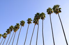 De Palmen van Hollywood Stock Afbeeldingen