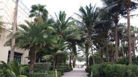 De palmen van Nice Stock Fotografie